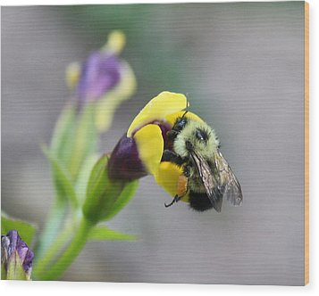 Wood Print featuring the photograph Bumble Bee Making A Wish by Penny Meyers