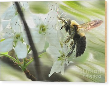 Bumble Bee On Flower Wood Print by Dan Friend