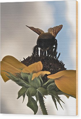 Bumblebee Wood Print by Kim Pippinger