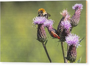 Wood Print featuring the photograph Bumblebee On Thistl by Leif Sohlman