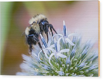 Wood Print featuring the photograph Bumblebee On Thistle Blossom by Marty Saccone