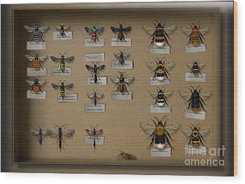 Bumblebees - Wild Bees - Wesps - Yellow Jackets - Ichneumon Flies - Apiformes Vespulas Hymenopteras  Wood Print by Urft Valley Art