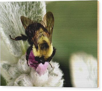 Wood Print featuring the photograph Bumbler by Cathy Donohoue
