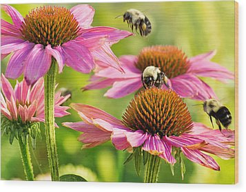 Bumbling Bees Wood Print by Bill Pevlor