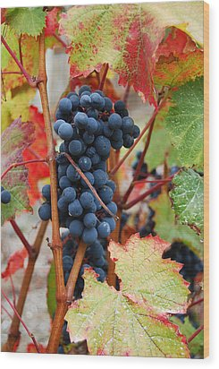 Bunch Of Grapes Wood Print by Jani Freimann