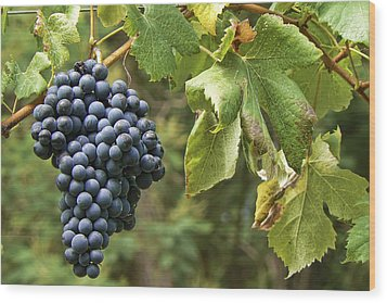 Bunch Of Grapes Wood Print by Paulo Goncalves