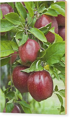 Bunch Of Red Apples Wood Print by Anthony Sacco
