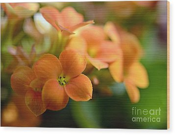 Bunch Of Small Orange Flowers Wood Print by Sami Sarkis