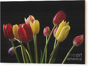 Bunch Of Tulips Wood Print by Eden Baed