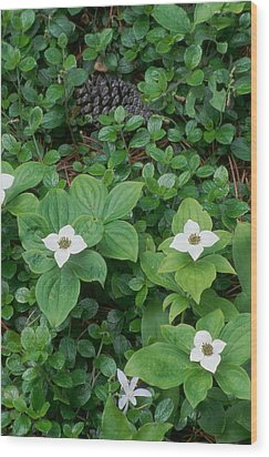 Wood Print featuring the photograph Bunchberry by Ken Dietz