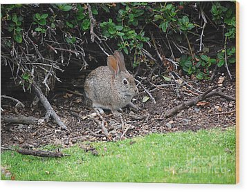 Wood Print featuring the photograph Bunny In Bush by Debra Thompson