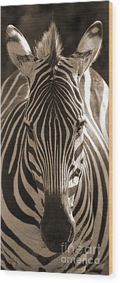 Wood Print featuring the photograph Burchell's Zebra by Chris Scroggins