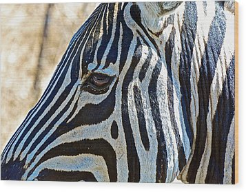 Burchell's Zebra's Face In Kruger National Park-south Africa Wood Print
