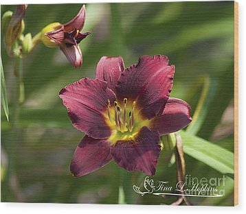 Burgundy Day Lily 20120706_24 Wood Print