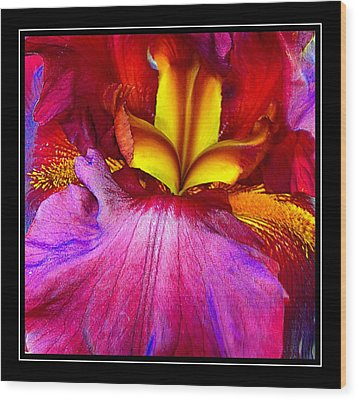 Burgundy Iris Enhanced Wood Print