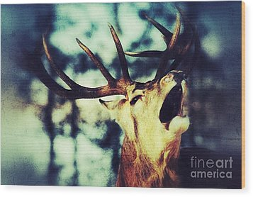 Wood Print featuring the photograph Burling Deer by Nick  Biemans