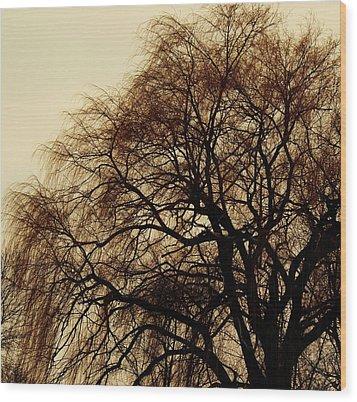 Burlington Willow Wood Print by Todd Sherlock