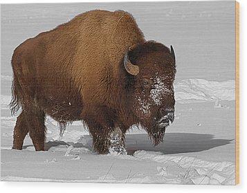 Burly Bison Wood Print by Priscilla Burgers