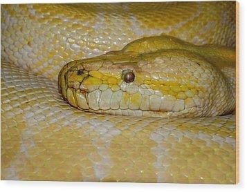 Burmese Python Wood Print by Ernie Echols
