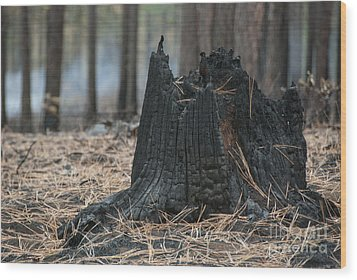 Burnt Tree Trunk Wood Print by Juli Scalzi
