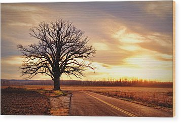 Burr Oak Silhouette Wood Print by Cricket Hackmann