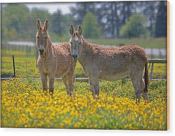 Burros In The Buttercups Wood Print by Suzanne Stout