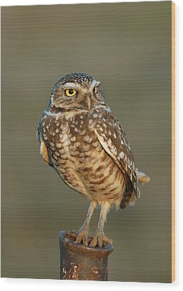 Burrowing Owl At Sunset Wood Print