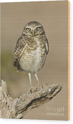 Wood Print featuring the photograph Burrowing Owl by Bryan Keil