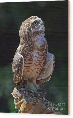 Wood Print featuring the photograph Burrowing Owl by Debby Pueschel