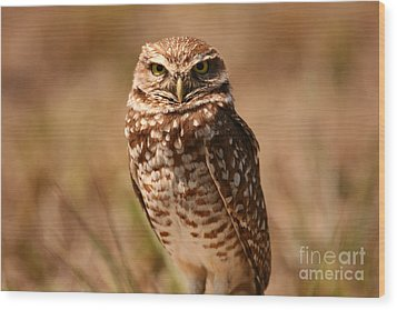Wood Print featuring the photograph Burrowing Owl Impressions by John F Tsumas
