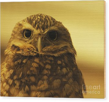 Wood Print featuring the photograph Burrowing Owl by Olivia Hardwicke