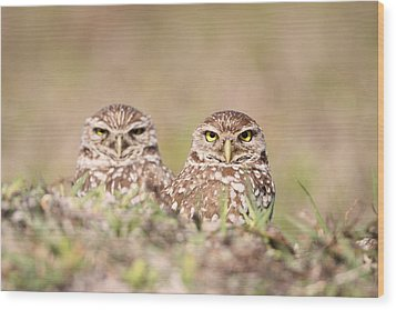 Burrowing Owl Pair Wood Print by Brian Magnier