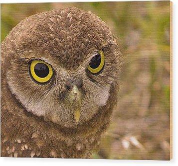 Burrowing Owl Portrait Wood Print by Anne Rodkin