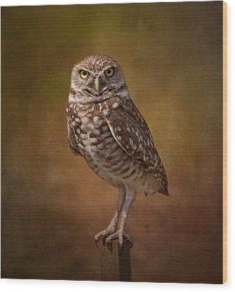 Burrowing Owl Portrait Wood Print by Kim Hojnacki