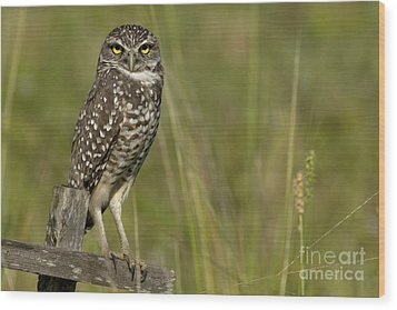 Burrowing Owl Stare Wood Print