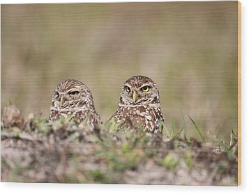 Burrowing Owls Wood Print by Brian Magnier