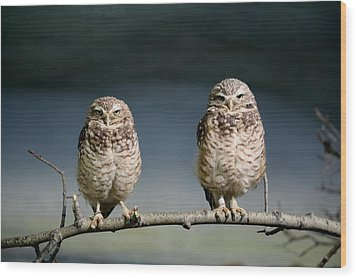 Burrowing Owls Wood Print by Larry Trupp