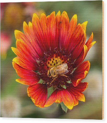 Wood Print featuring the photograph Burst Of Color by Kathleen Scanlan