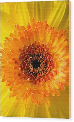 Burst Of Sunshine Wood Print by Shelby  Young