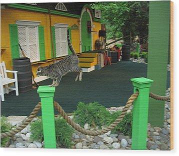 Busch Gardens - Animal Show - 121239 Wood Print by DC Photographer