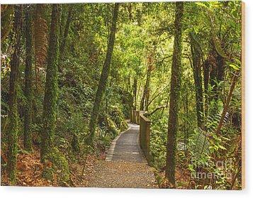 Bush Pathway Waikato New Zealand Wood Print by Colin and Linda McKie
