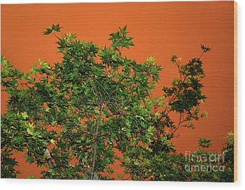 Bushfire Skies Wood Print by Kaye Menner