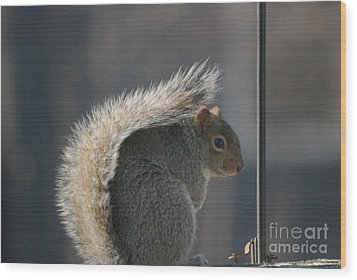 Wood Print featuring the photograph Bushy Tail by Mark McReynolds
