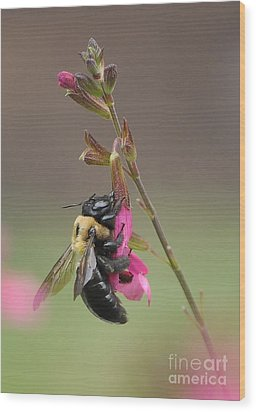 Busy As A Bee Wood Print by Kathy Baccari