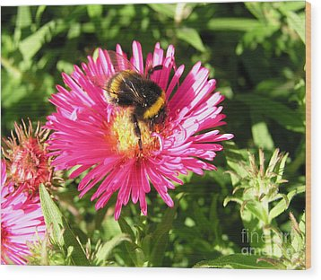 Busy Bee Wood Print by Bev Conover