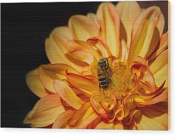 Busy Bee Dahlia Wood Print