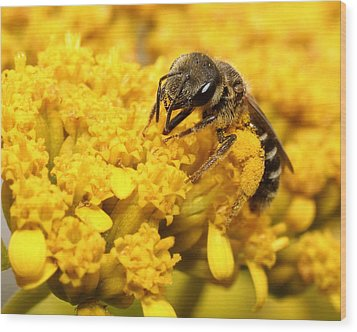 Wood Print featuring the photograph Busy Bee by Dawn Currie