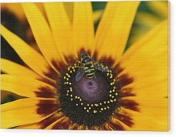 Busy Bee Wood Print by Denyse Duhaime