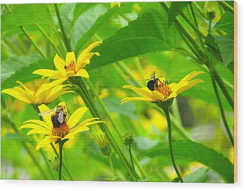 Busy Bees Wood Print by Andrea Dale