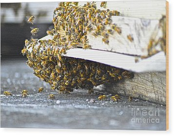 Wood Print featuring the painting Busy Bees by Laura Forde
